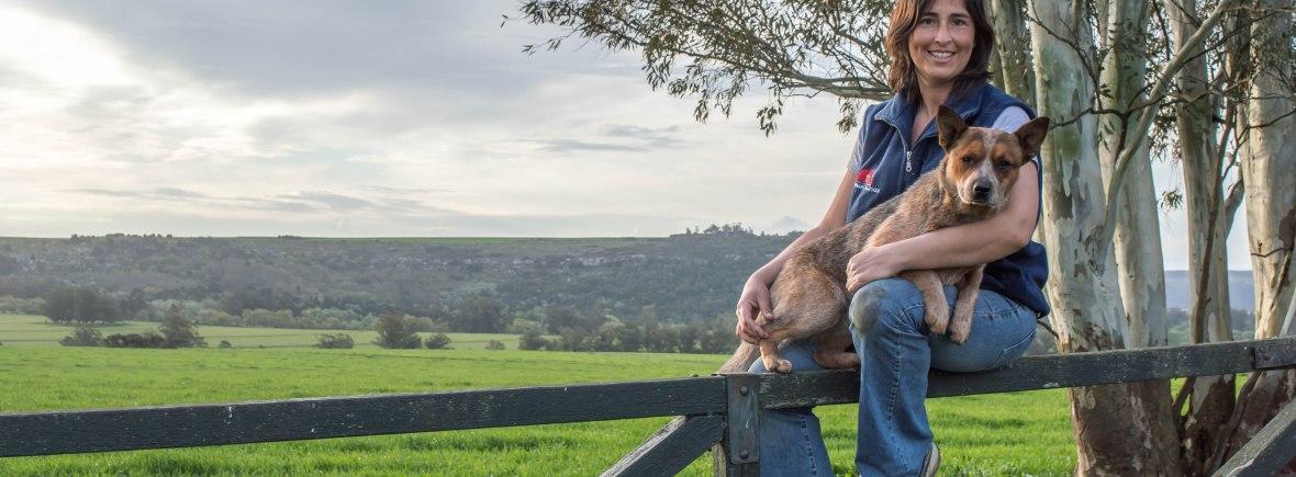 Australian Cattle Dog Argentina
