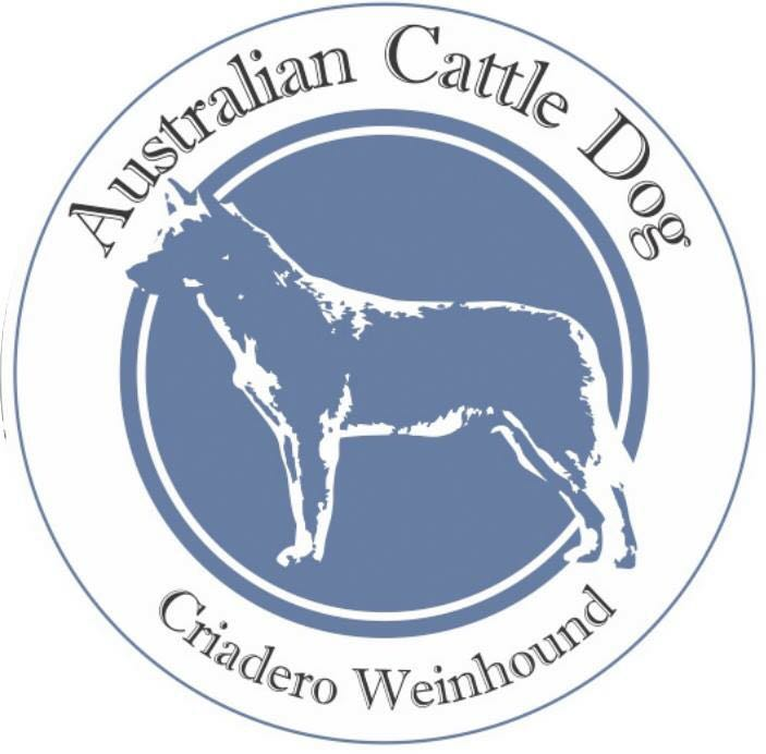 Australian Cattle Dog - Criadero Weinhound