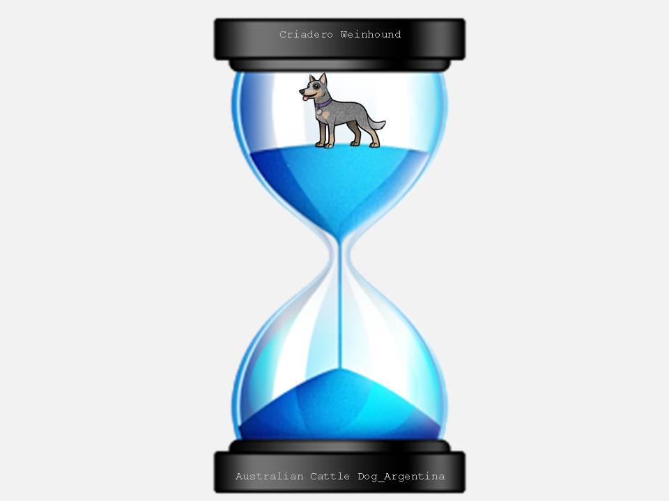 tiempo cachorros